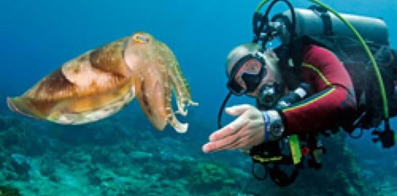 Exmouth Diving Centre: Ningaloo Reef Scuba Dives