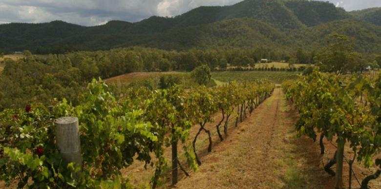 Boutique Wine Tours: Hunter Valley 1 Day Wine Tour
