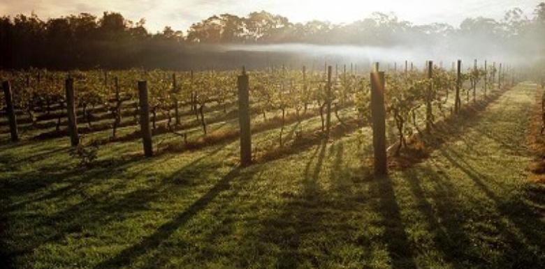 Bunyip tours: 1 Day Hunter Valley Tour