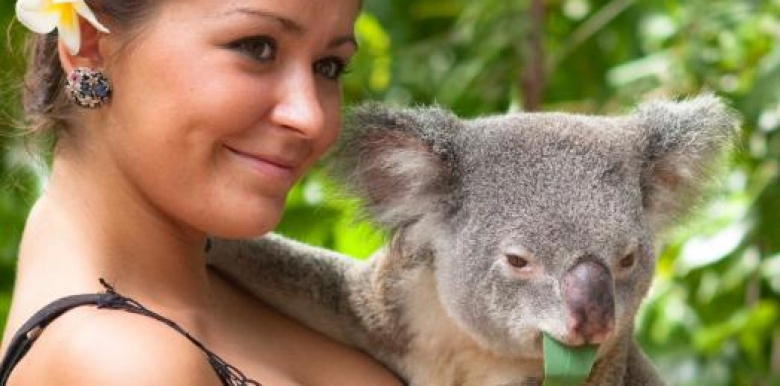 Bungalow Bay - 2 Night LOKA Koala Cuddle Express (EXCL RETURN FERRY)