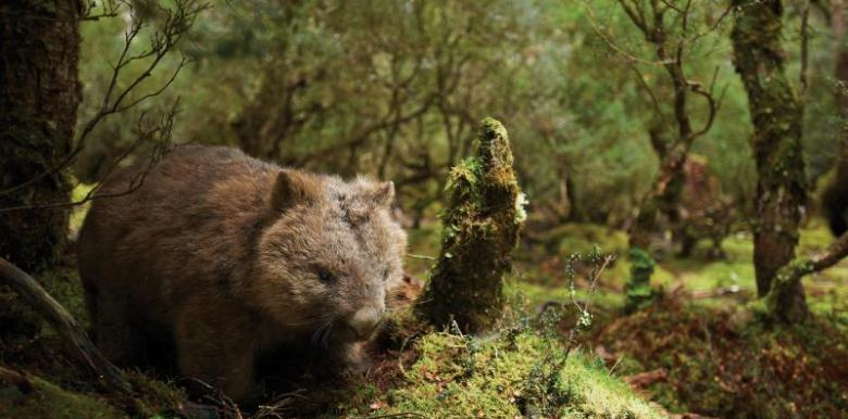 Tasmania Explorer 6 Day Tour