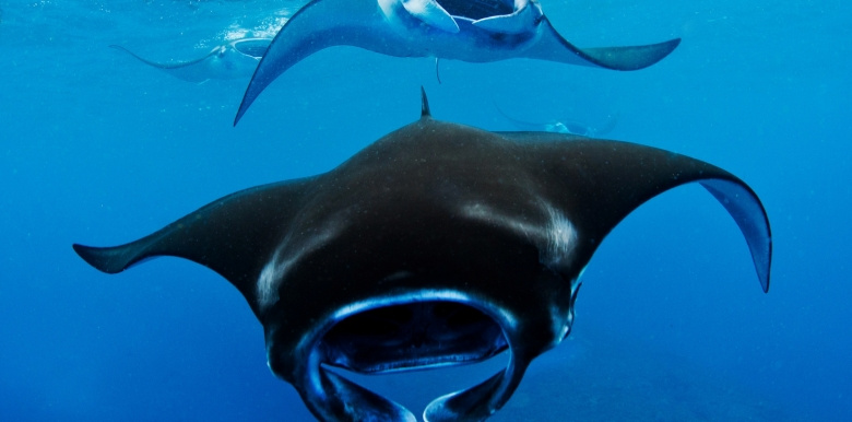 Coral Bay Ecotours: Marine Ecotour with Manta Rays